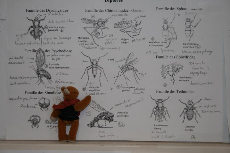 http://spiderphat.free.fr/Antoine/Crozet/HommeNature%20(800x534).jpg